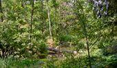 Randonnée Marche Sainte-Ode - Amberloup, Natura 2000 - Des sites qui valent le détour. Lx11 - Photo 3