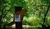 Randonnée Marche Sainte-Ode - Amberloup, Natura 2000 - Des sites qui valent le détour. Lx11 - Photo 9