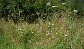 Randonnée Marche Sainte-Ode - Amberloup, Natura 2000 - Des sites qui valent le détour. Lx11 - Photo 1