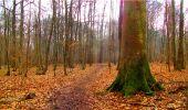 Randonnée Marche LONGPONT - en forêt de Retz_16_Longpont_carrefour du Chapeau des Cordeliers_AR - Photo 74