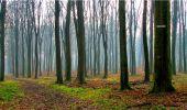 Randonnée Marche LONGPONT - en forêt de Retz_16_Longpont_carrefour du Chapeau des Cordeliers_AR - Photo 20
