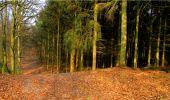 Randonnée Marche LONGPONT - en forêt de Retz_16_Longpont_carrefour du Chapeau des Cordeliers_AR - Photo 32