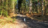 Trail Walk LONGPONT - en forêt de Retz_17_Longpont_etangs de la Ramee_AR - Photo 26