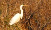 Trail Walk LONGPONT - en forêt de Retz_17_Longpont_etangs de la Ramee_AR - Photo 46