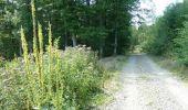Trail Walk Houffalize - ESCAPARDENNE EISLECK TRAIL Etape 5 - Nadrin - La Roche-en-Ardenne - Photo 12