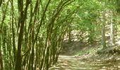 Trail Walk Houffalize - ESCAPARDENNE EISLECK TRAIL Etape 5 - Nadrin - La Roche-en-Ardenne - Photo 13