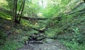 Trail Walk Houffalize - ESCAPARDENNE EISLECK TRAIL Etape 5 - Nadrin - La Roche-en-Ardenne - Photo 3