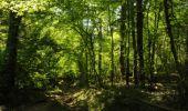 Randonnée Marche Houyet - La Lesse, Natura 2000 - Des sites qui valent le détour, Na07 - Photo 14