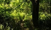 Randonnée Marche Houyet - La Lesse, Natura 2000 - Des sites qui valent le détour, Na07 - Photo 15