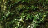 Randonnée Marche Houyet - La Lesse, Natura 2000 - Des sites qui valent le détour, Na07 - Photo 7