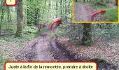 Trail Nordic's walk LANDEAN - CMN Françoise 13 - Photo 7
