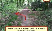 Trail Nordic's walk LANDEAN - CMN Françoise 13 - Photo 26