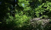 Randonnée Marche Saint-Hubert - Saint-Hubert - Circuit Natura 2000, des sites qui valent le détour - Lx16 - Photo 5