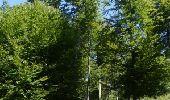Randonnée Marche Saint-Hubert - Saint-Hubert - Circuit Natura 2000, des sites qui valent le détour - Lx16 - Photo 4