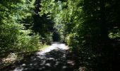Randonnée Marche Saint-Hubert - Saint-Hubert - Circuit Natura 2000, des sites qui valent le détour - Lx16 - Photo 3