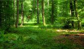 Randonnée Marche LONGPONT - en forêt de Retz_18_Longpont_etangs de la Ramee_AR - Photo 61
