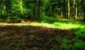 Randonnée Marche LONGPONT - en forêt de Retz_18_Longpont_etangs de la Ramee_AR - Photo 55