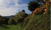Randonnée Marche BUSSANG - Le Drumont - Bussang - Photo 6
