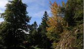 Randonnée Marche BUSSANG - Le Drumont - Bussang - Photo 4