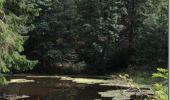 Randonnée Marche BUSSANG - Le Drumont - Bussang - Photo 3