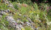 Randonnée Marche Rochefort - Nature - Circuit à la découverte de la nature autour de Han-sur-Lesse, Eprave, Villers-sur-Lesse & Lessive - Photo 20