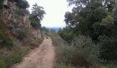 Randonnée Course à pied BORMES-LES-MIMOSAS - footing01h00 (entrainement trail) - Photo 1