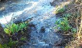 Randonnée Marche L'ISLE-D'ABEAU - balade en forêt - Photo 2