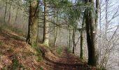 Trail Walk Couvin - Balade à Couvin - Photo 2