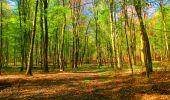 Trail Walk LONGPONT - en forêt de Retz_24_Longpont_MF du Rond de la Reine_AR - Photo 111