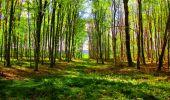 Trail Walk LONGPONT - en forêt de Retz_24_Longpont_MF du Rond de la Reine_AR - Photo 113