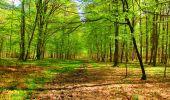 Trail Walk LONGPONT - en forêt de Retz_24_Longpont_MF du Rond de la Reine_AR - Photo 118