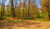 Trail Walk LONGPONT - en forêt de Retz_24_Longpont_MF du Rond de la Reine_AR - Photo 107