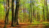Trail Walk LONGPONT - en forêt de Retz_24_Longpont_MF du Rond de la Reine_AR - Photo 119