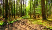 Trail Walk LONGPONT - en forêt de Retz_24_Longpont_MF du Rond de la Reine_AR - Photo 100