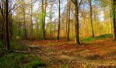 Trail Walk LONGPONT - en forêt de Retz_24_Longpont_MF du Rond de la Reine_AR - Photo 39