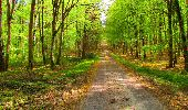 Trail Walk LONGPONT - en forêt de Retz_24_Longpont_MF du Rond de la Reine_AR - Photo 106