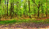 Trail Walk LONGPONT - en forêt de Retz_24_Longpont_MF du Rond de la Reine_AR - Photo 121