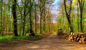 Trail Walk LONGPONT - en forêt de Retz_24_Longpont_MF du Rond de la Reine_AR - Photo 88