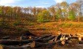 Trail Walk LONGPONT - en forêt de Retz_24_Longpont_MF du Rond de la Reine_AR - Photo 160