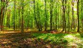 Trail Walk LONGPONT - en forêt de Retz_24_Longpont_MF du Rond de la Reine_AR - Photo 114