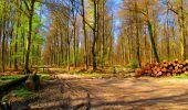 Trail Walk LONGPONT - en forêt de Retz_24_Longpont_MF du Rond de la Reine_AR - Photo 89