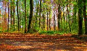 Trail Walk LONGPONT - en forêt de Retz_24_Longpont_MF du Rond de la Reine_AR - Photo 64