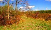 Trail Walk LONGPONT - en forêt de Retz_24_Longpont_MF du Rond de la Reine_AR - Photo 141