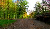 Trail Walk LONGPONT - en forêt de Retz_24_Longpont_MF du Rond de la Reine_AR - Photo 50