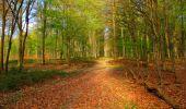 Trail Walk LONGPONT - en forêt de Retz_24_Longpont_MF du Rond de la Reine_AR - Photo 40