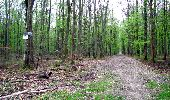 Trail Walk LONGPONT - en forêt de Retz_24_Longpont_MF du Rond de la Reine_AR - Photo 11