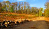 Trail Walk LONGPONT - en forêt de Retz_24_Longpont_MF du Rond de la Reine_AR - Photo 159