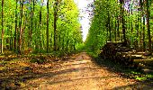 Trail Walk LONGPONT - en forêt de Retz_24_Longpont_MF du Rond de la Reine_AR - Photo 101