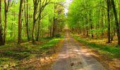 Trail Walk LONGPONT - en forêt de Retz_24_Longpont_MF du Rond de la Reine_AR - Photo 105