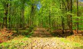 Trail Walk LONGPONT - en forêt de Retz_24_Longpont_MF du Rond de la Reine_AR - Photo 137
